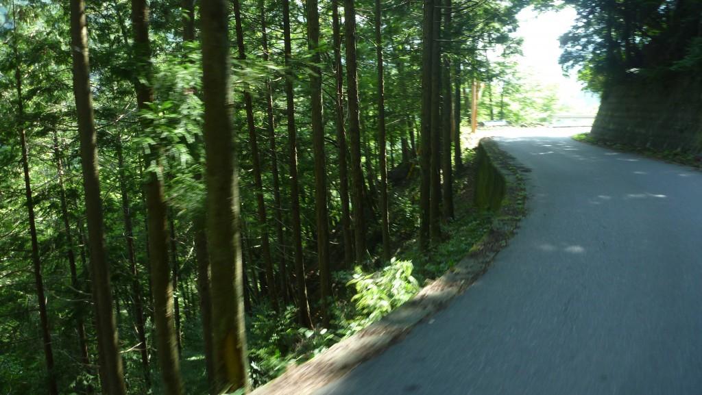 2:19PM@下栗の里を過ぎた林道