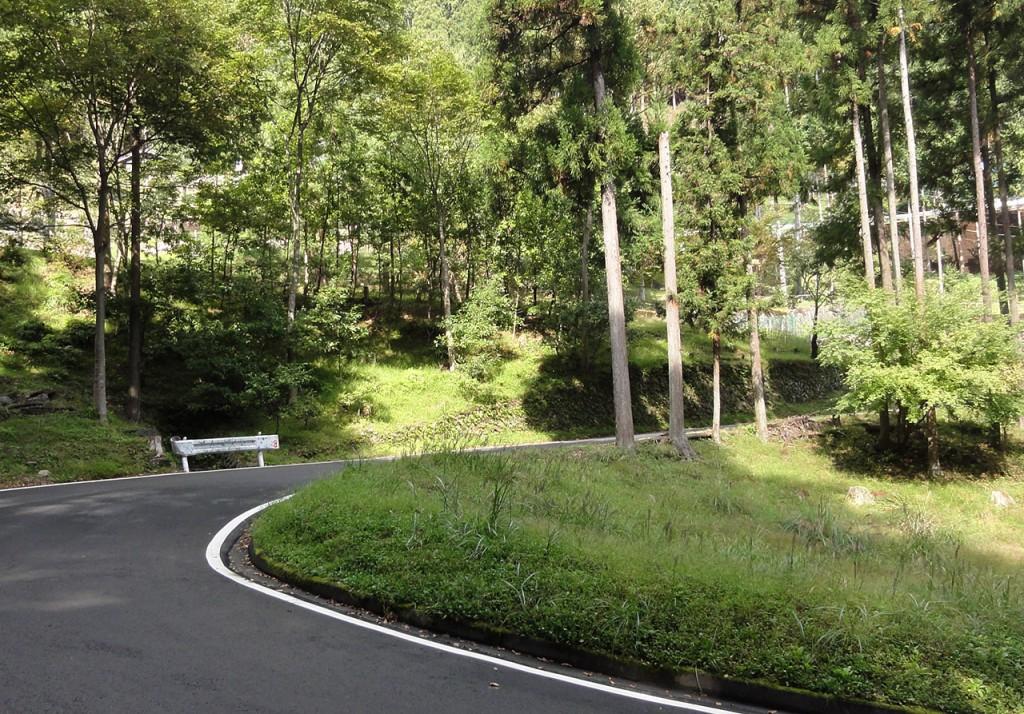 美しい林道