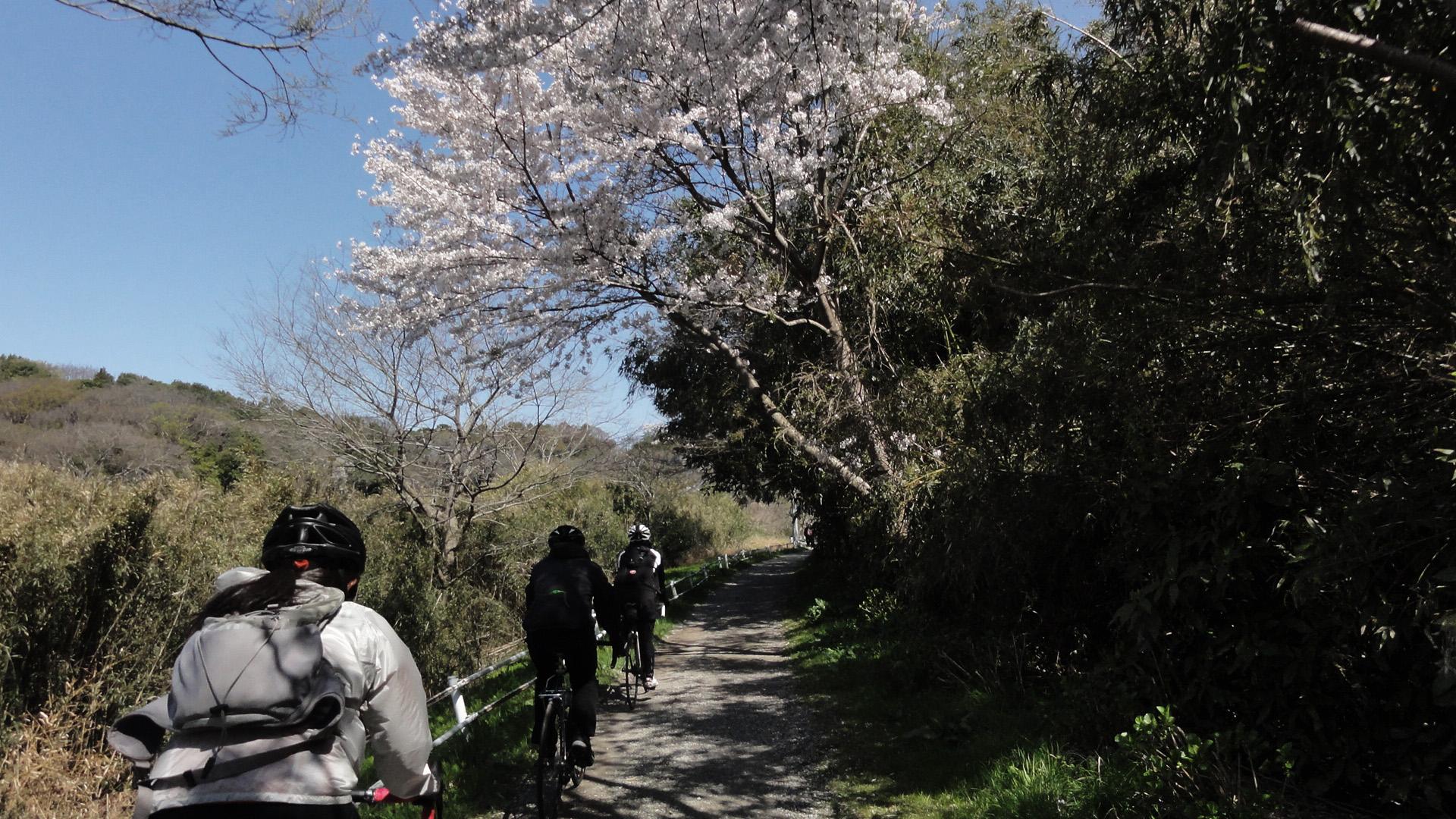 hanamigawa_03
