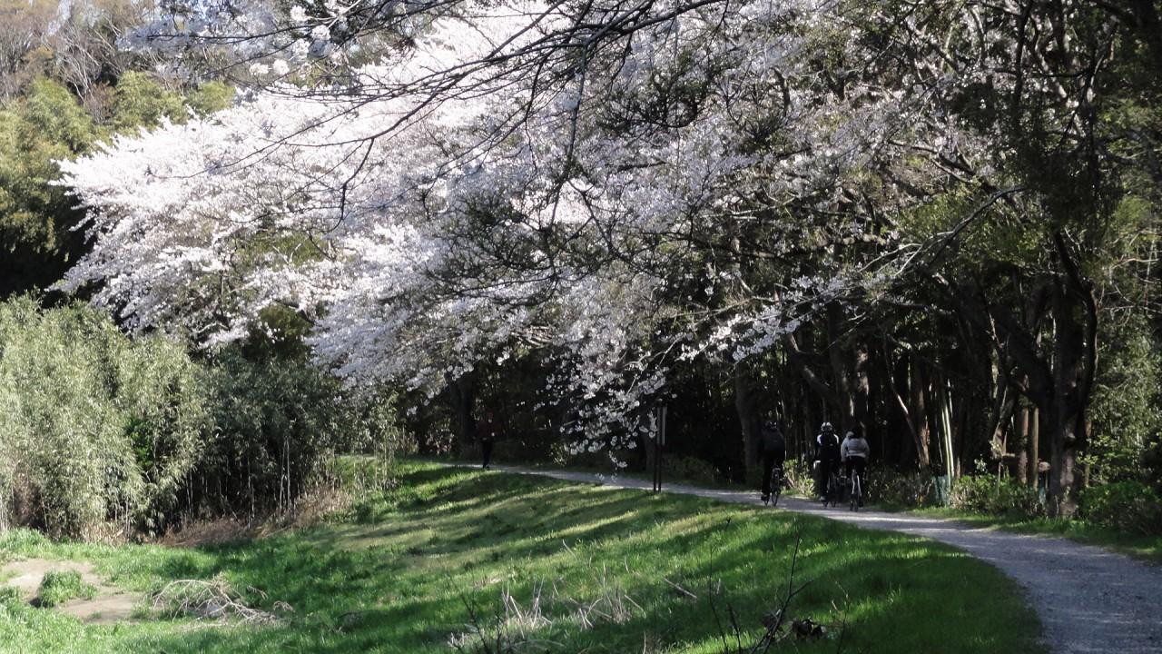 hanamigawa_04