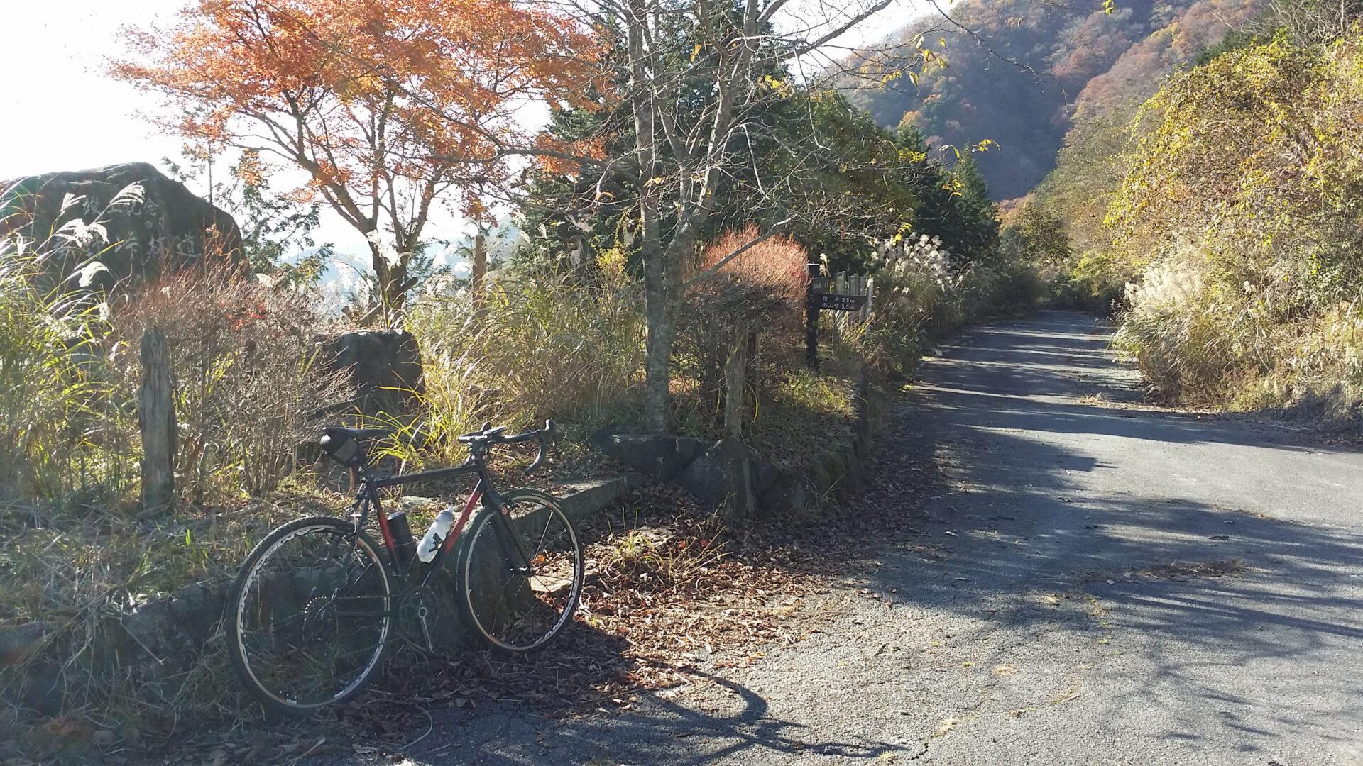 秦野峠林道