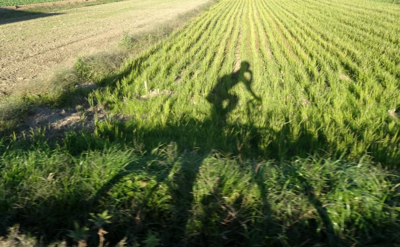 房総の谷津道と古道で銚子までロングライド