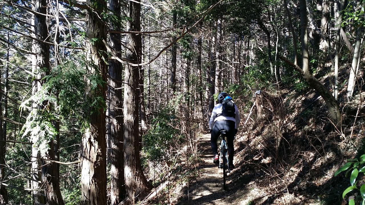 小下沢林道へ下りる登山道