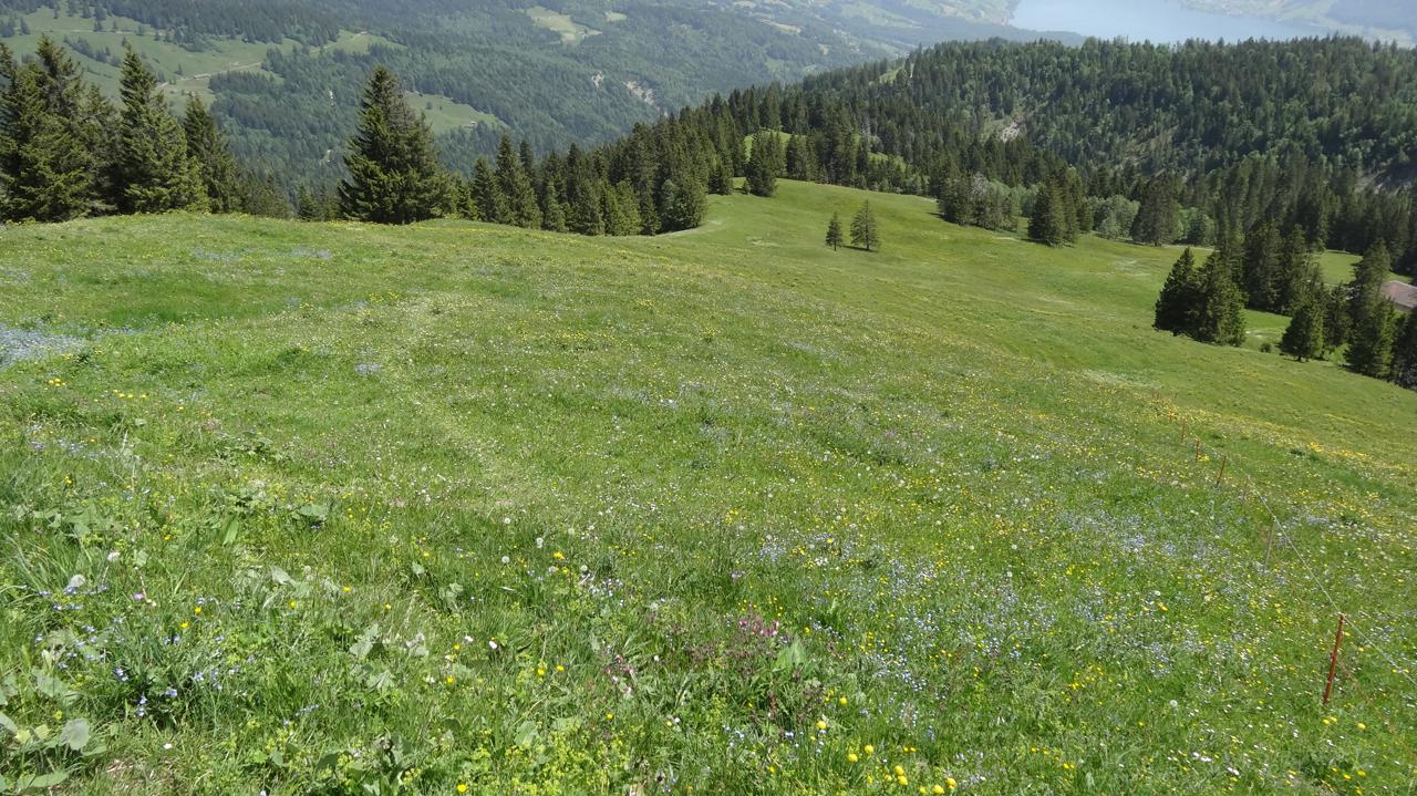 初夏のスイス