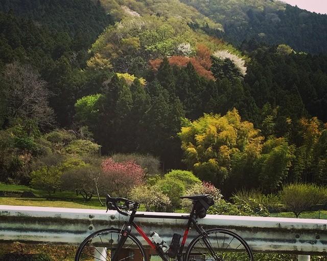 桜と新緑のヤビツ峠を3週連続でチェック