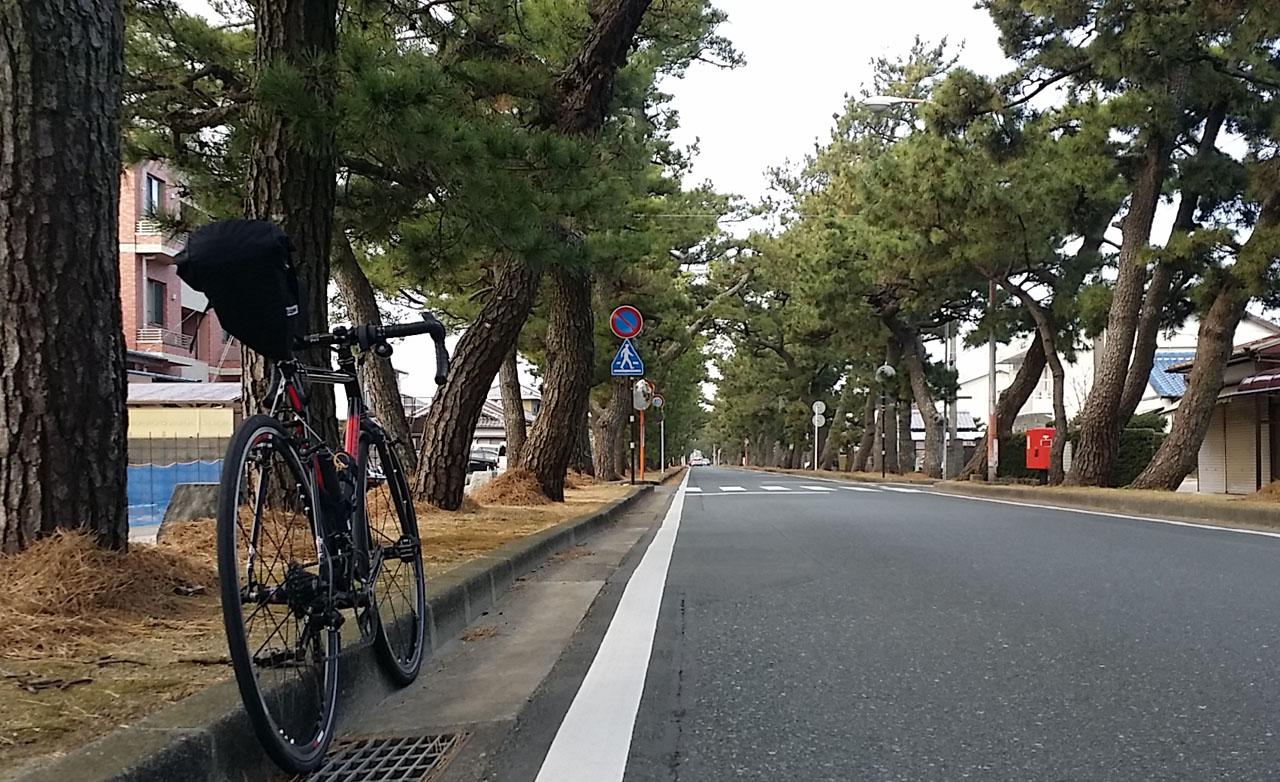 舞阪宿 松並木