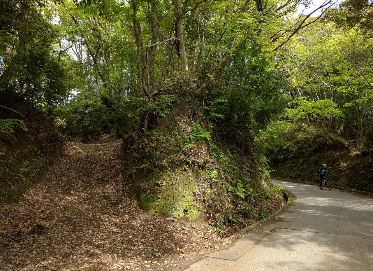 林道の分かれ道