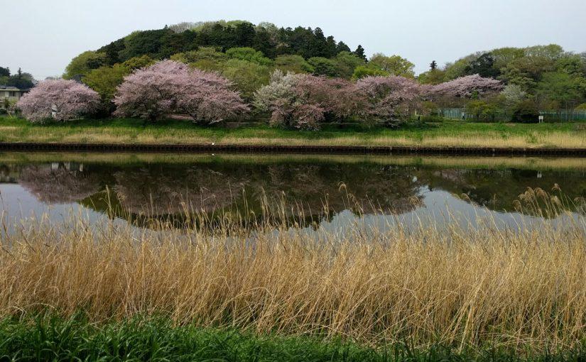 吉高の大桜を見て鰻をたべるライド 2016年