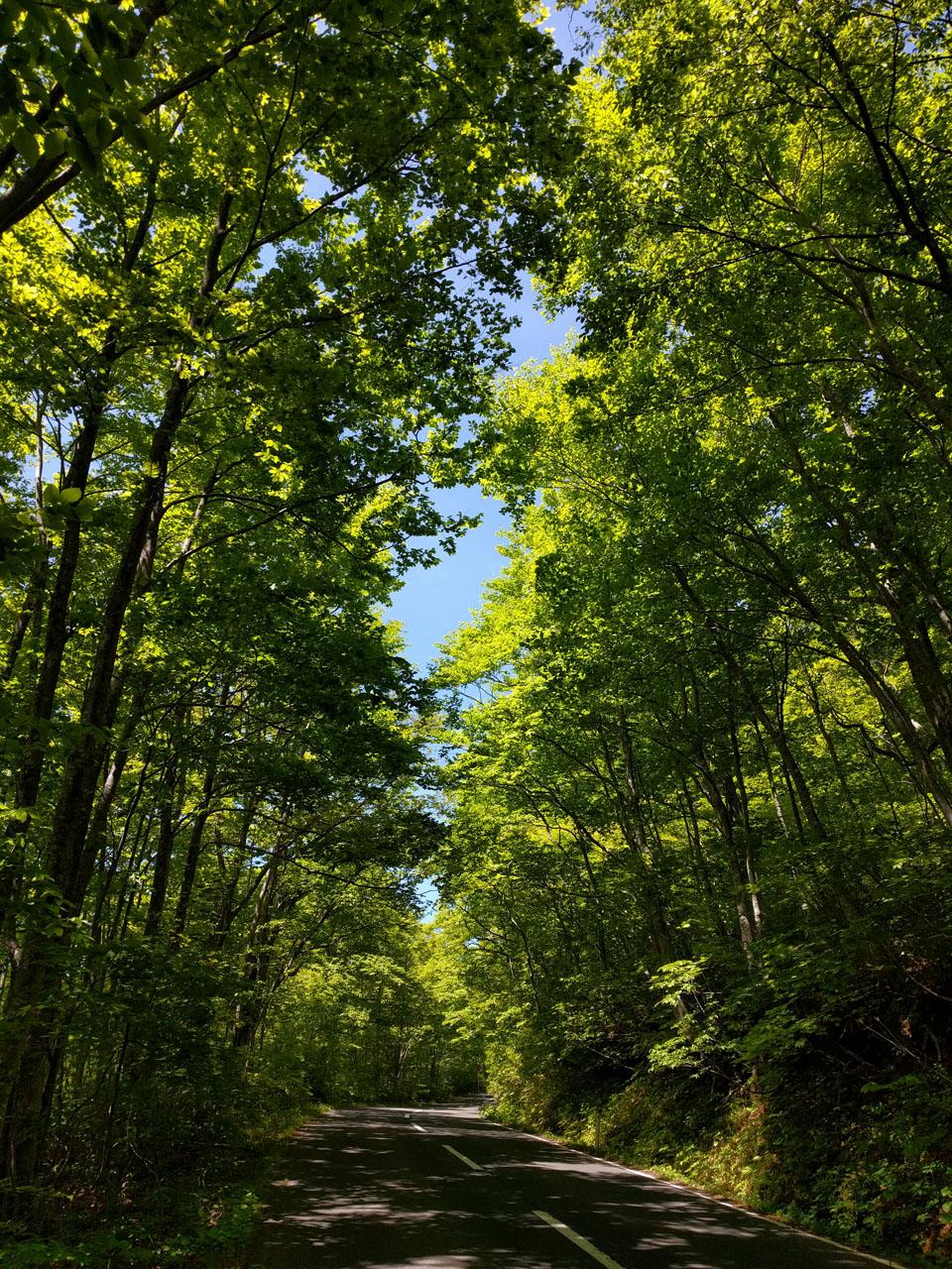 傘松峠への上り道