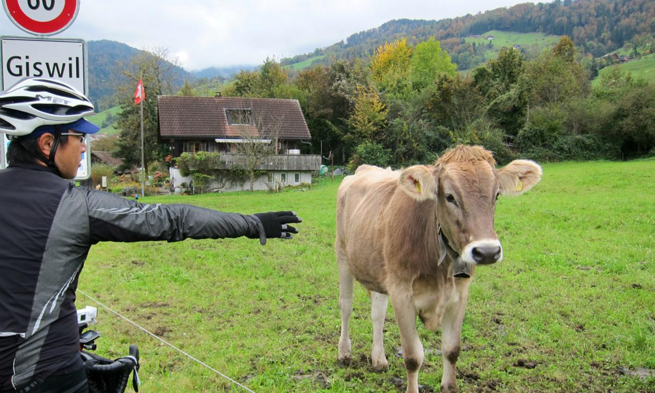牛に挨拶 Photo by でっちーさん