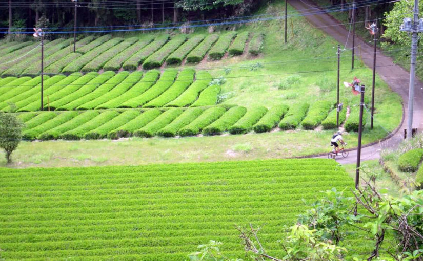 お茶畑と廃校とちいさな峠を訪ねるライド