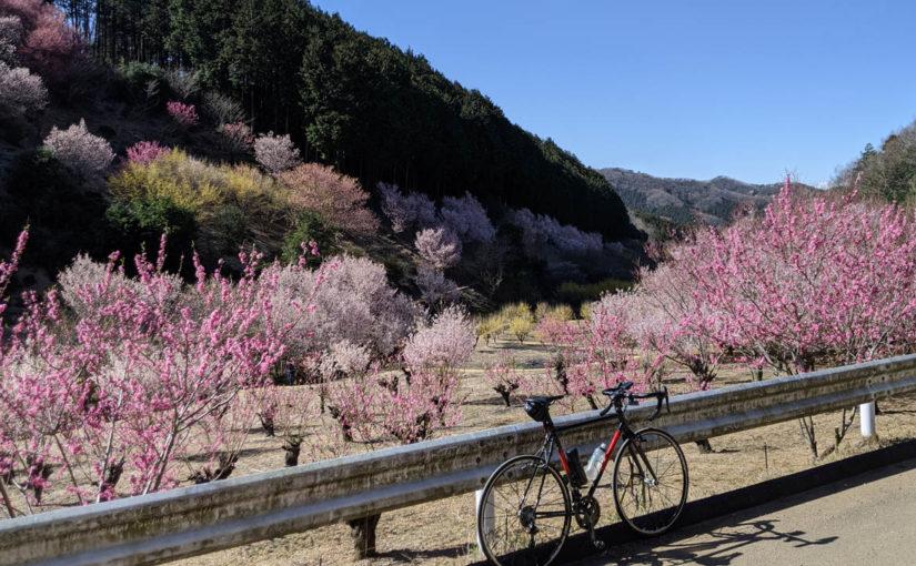 奥武蔵グリーンラインで小川町の桃源郷へ。ライド後は麦雑穀工房で癒やされる